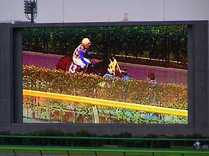 毎日王冠本馬場入場、時のスイープさんを映したターフビジョン@東京競馬場